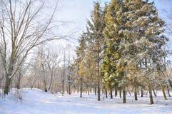 Het park van de winter in sneeuw Royalty-vrije Stock Afbeeldingen
