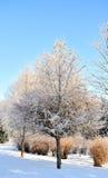 Het park van de winter in sneeuw Royalty-vrije Stock Fotografie