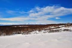 Het park van de winter in sneeuw Stock Afbeelding