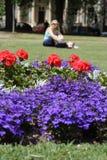 Het park van de zomer stock foto's
