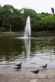 Het park van de zomer Royalty-vrije Stock Foto