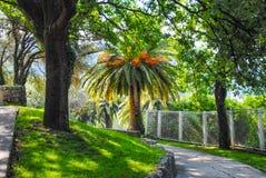 Het park van de zomer met palmen Stock Afbeeldingen