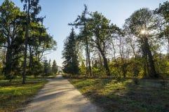 Het park van de zonsondergangherfst Stock Fotografie