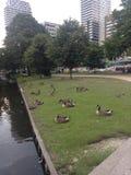 Het park van Den Haag Stock Foto's