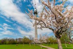 Het Park van Donau, de moderne stad van Wenen oostenrijk Royalty-vrije Stock Afbeelding