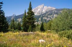 Het Park van Grand Teton, een mening van de kleurrijke vallei stock afbeeldingen