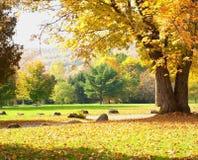 Het park van het land Stock Foto's