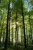 Het Park van het Land van bossenpollock Stock Foto's