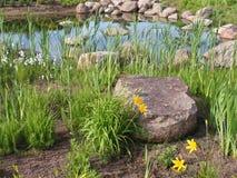 Het park van het landschap in de lente Stock Foto