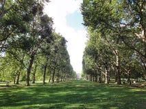 Het park van Hyde Stock Foto's