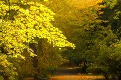 Het park van Krakau in de herfst stock afbeelding