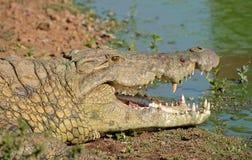 Het park van krokodilkruger Stock Afbeelding