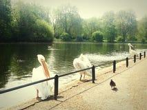Het park van Londen Royalty-vrije Stock Fotografie