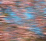 in het park van Londen de roze boom en bloesem natuurlijke bloemen Stock Afbeeldingen