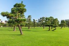 Het park van pijnboombomen in Tokio Royalty-vrije Stock Foto