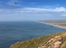 Het park van puntreyes national seashore royalty-vrije stock foto