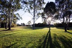 Het Park van Queensland, Brisbane Stock Afbeelding