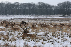 Het park van Richmond in de sneeuw Stock Foto's