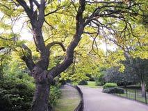 Het park van Waterlow Stock Afbeelding