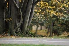 Het parkachtergrond van de herfst Royalty-vrije Stock Afbeelding