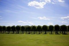 Het parkachtergrond van de zomer Stock Fotografie