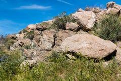 Het Parkkeien en de Lente Wildflowers van de Staat anza-Borrego Stock Foto's