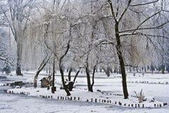 Het parklandschap van de winter Stock Afbeelding
