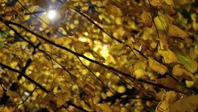 Het parknacht van het Autumblad stock footage