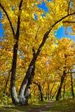 Het parkscène van de herfst Stock Afbeeldingen