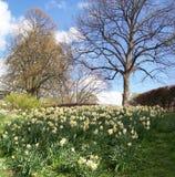 Het parkscène van de lente Royalty-vrije Stock Afbeelding