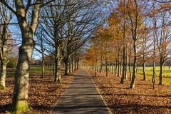 het parkweg van het de herfstlandschap stock foto's