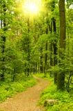Het parkweg van de lente royalty-vrije stock foto