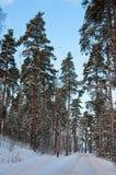 Het parkweg van de sneeuw Stock Afbeeldingen
