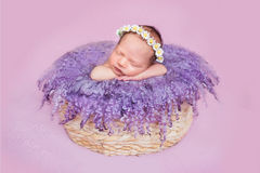 Het pasgeboren meisje in een kroon van madeliefjes Stock Afbeeldingen