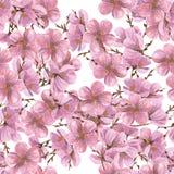 Het patroon Naadloos bloemenpatroon van waterverfpioenen Aquarelle die op witte achtergrond trekken royalty-vrije illustratie