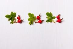Het patroon, samenstelling van rozebottels, bessen en bladeren op w Royalty-vrije Stock Foto