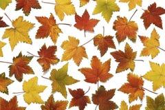 Het patroon van Backround van de herfstbladeren stock foto