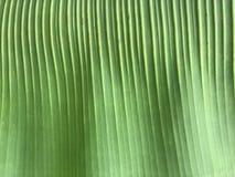 Het patroon van het banaanblad Stock Foto