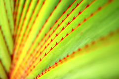 Het patroon van bladeren Stock Foto