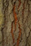 Het patroon van boomschors Achtergrond Mooie textuur royalty-vrije stock fotografie