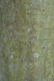 Het patroon van boomschors Achtergrond Mooie textuur stock foto's