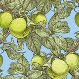 Het patroon van de appelboom vertakt zich stock illustratie