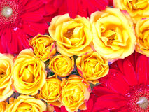 Het Patroon van de bloem stock foto's