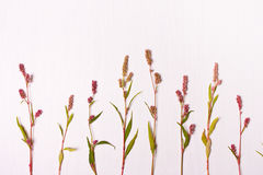 Het patroon van de bloem Vlak leg Stock Foto