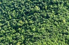 Het patroon van de boom royalty-vrije stock afbeeldingen