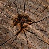 Het Patroon van de boomstomp Royalty-vrije Stock Foto's