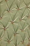 Het patroon van de cactus Royalty-vrije Stock Foto's