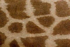 Het patroon van de girafhuid Het close-up van het girafbont stock foto