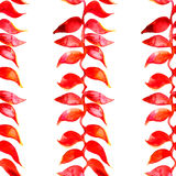 Het patroon van de Heliconiawaterverf Vector Tropisch patroon Stock Afbeelding