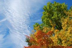 Het patroon van de herfst Stock Foto